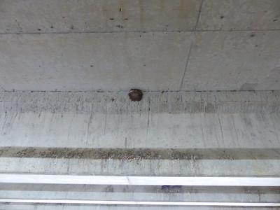 Barn Swallow - nest