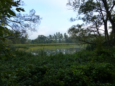 Pond and marsh area