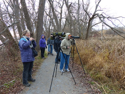 PFN members viewing the Marsh and looking for the rare Glossy Ibis