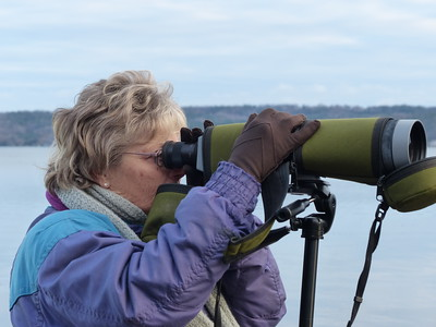 Looking through spotting scope for Cackling Geese