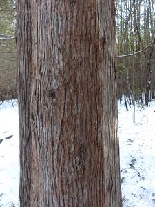 Porcupine - tree marks