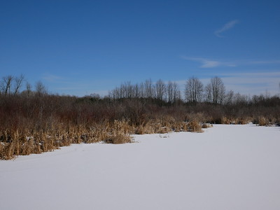 Beaver pond and wetland habitat