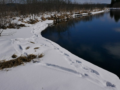 Northern River Otter - tracks, trail and slide marks