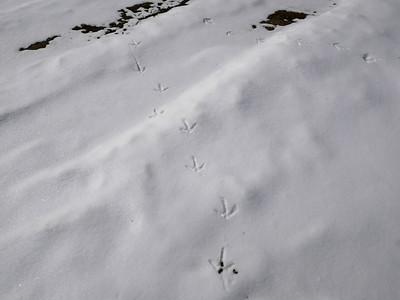 Wild Turkey - tracks