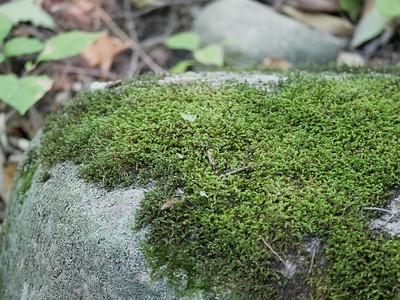 Moss sp