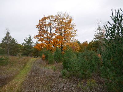 View of walking trails and fall colours at Ballyduff Trails