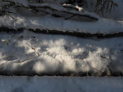 Porcupine - tracks