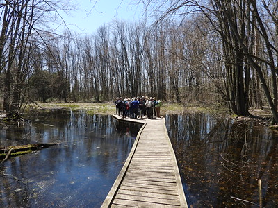 WBFN and PFN members on boardwalk in wetland