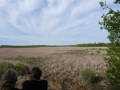 PFN members standing on the observation platform and observing birds in the Miller Creek wetland