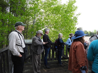PFN members observing birds from the observation platform