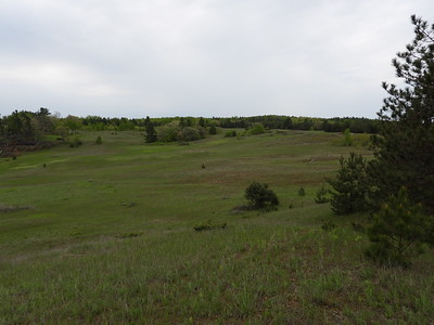 Grasslands at Hazel Bird Nature Reserve
