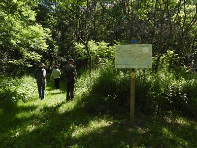 PFN members walking through the Ingleton-Wells section of the Stony Lake Trails