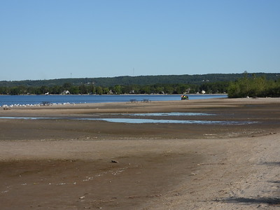 View of beach and mud flats with feeding shorebirds located near the small pools