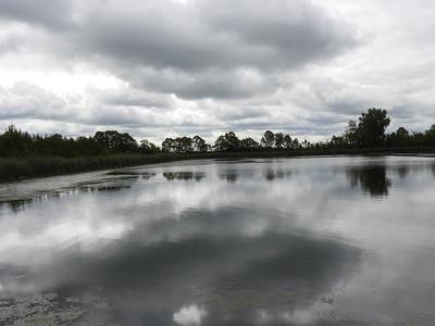 Lakefield sewage lagoons with various waterfowl