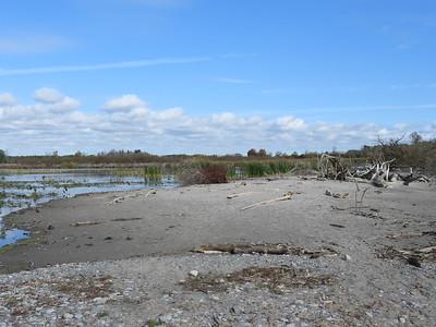 Cranberry Marsh near Lake Ontario
