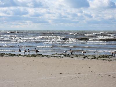 Mix of birds along shoreline