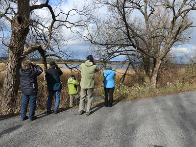 PFN members viewing Tundra Swans