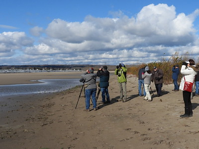 PFN members viewing shorebirds and gulls at Presqu'ile