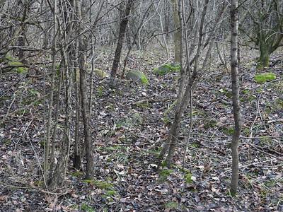 White-tailed Deer - deer run