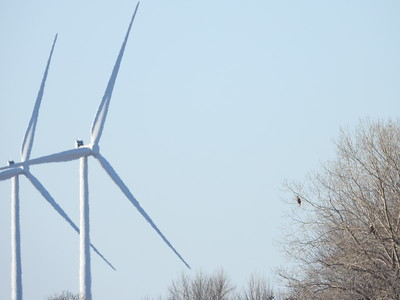 Wind turbines on Amherst Island with Bald Eagles to the right. Note the 'heat' wave distortion in the air affecting image quality, a problem which plagued us all day.