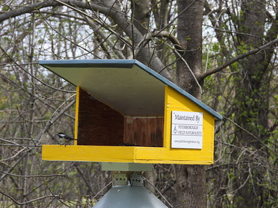 PFN bird feeder