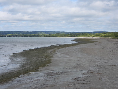 View along beach where most of the shorebirds were observed