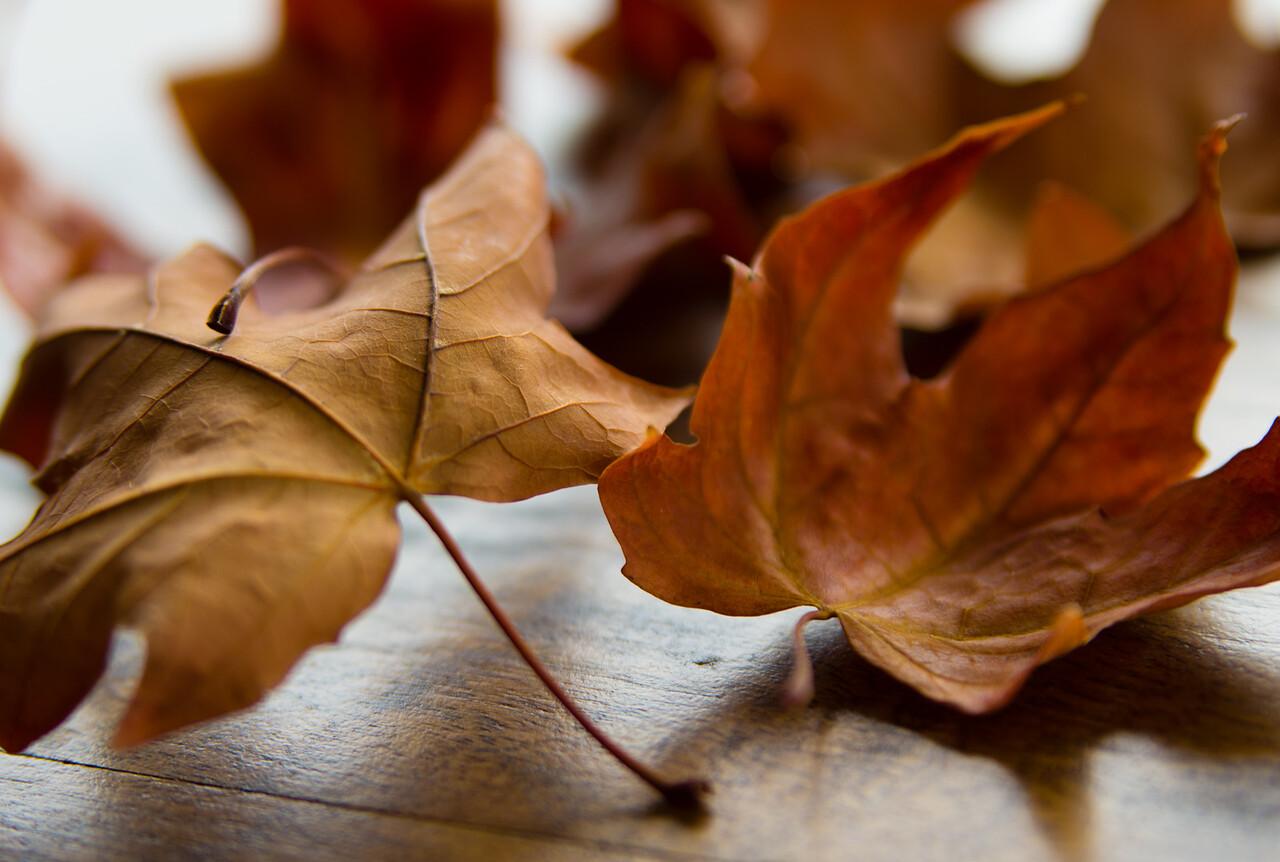 Leaf Detail