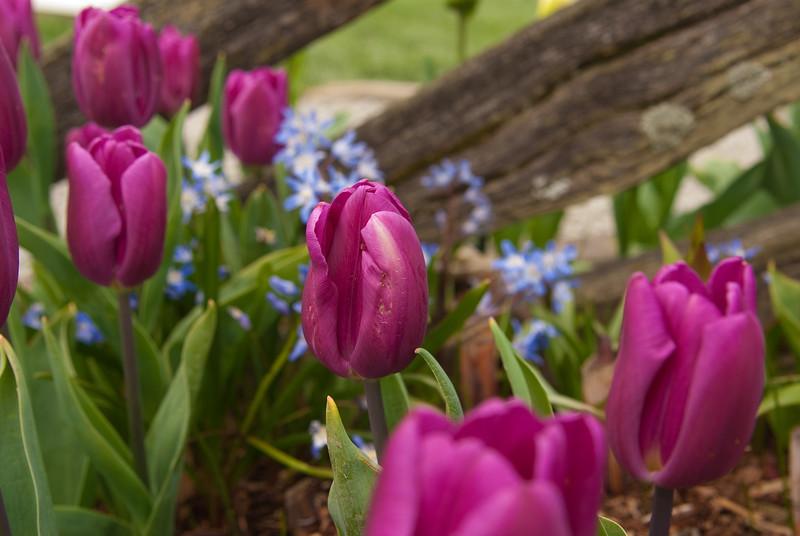 Spring Fence