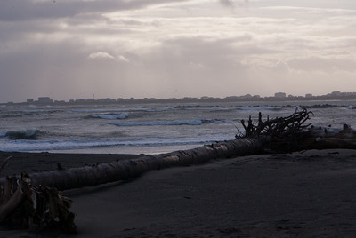 Ocean Shores and Snowy Owls, February 2012