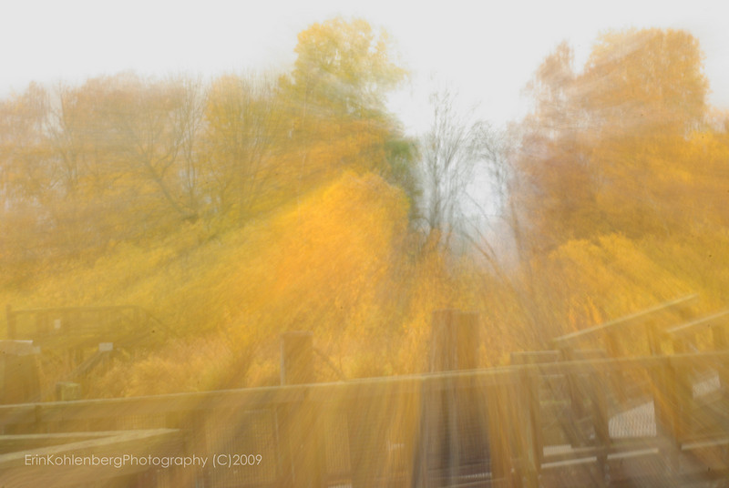 """submitted for """"kinetics"""" challenge. Slow shutter, and then moving the zoom out during the exposure."""