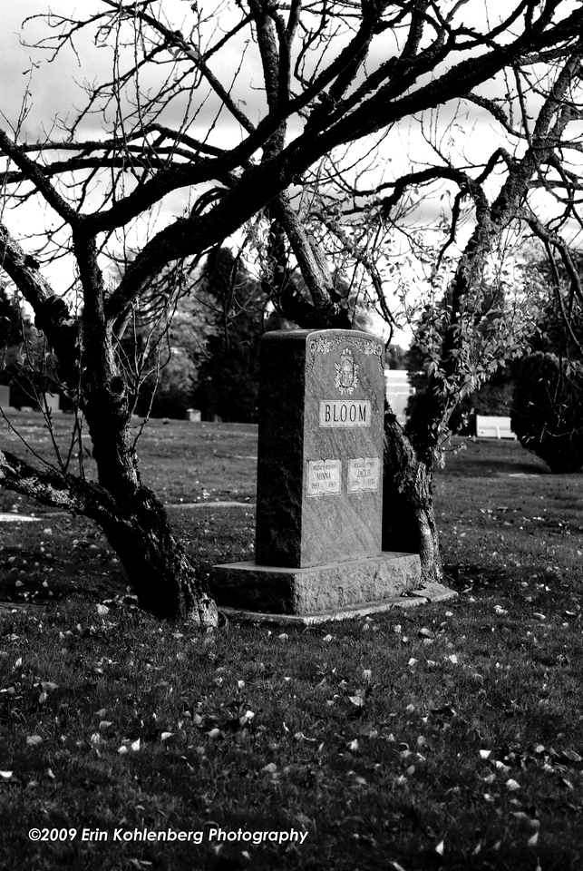 Daily 10/27/09.  'Tis the season. Graveyard scene from the cemetery by my house in Seattle, WA.