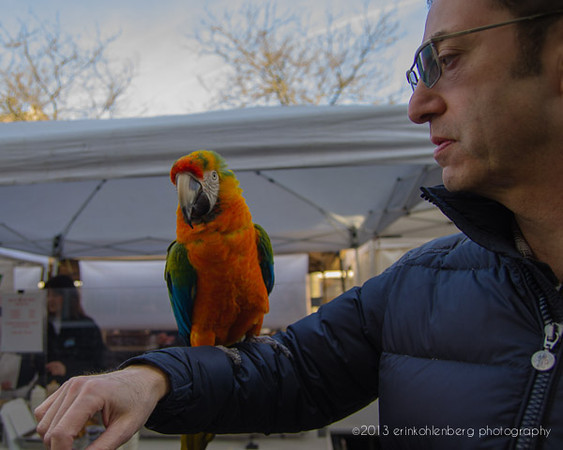 Man with bird.. Ballard Farmer's Market, February 2012.