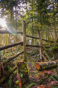Sun peeks through the trees at Wallace Falls State Park in Gold Bar, WA
