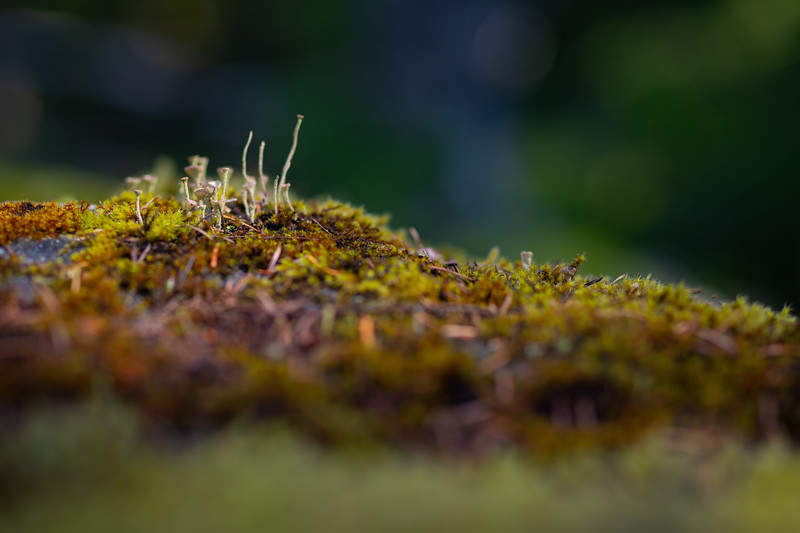 Soft moss near Nickel Creek