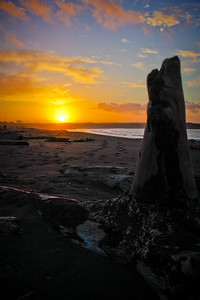 Driftwood at sunset in Westport, WA