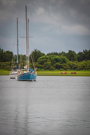 Wild ponies and Beaufort waterfront