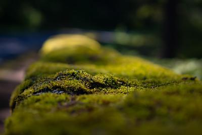 Soft moss near Nickel Creek