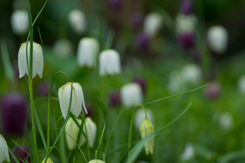 Spring at Bellevue Botanical Garden, WA, April 2019