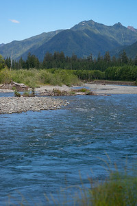 A river near Lake Quinault, WA