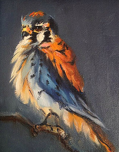 Kestrel oil painting