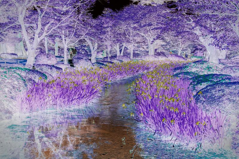 Kenrokuen Gardens, Kanazawa, Japan; Abstract