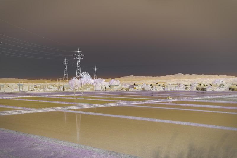Paddy field, Noshiro, Japan. Abstract