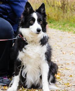 Josie, Chagrin River Park, October 28, 2014
