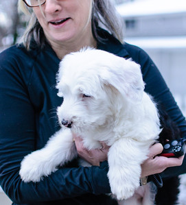 Mabel, the English sheepdog puppy, with Alison, December 7, 2013