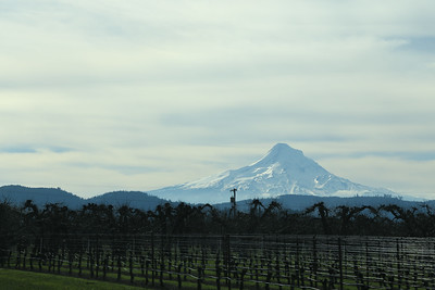 Apple Orchards near Mt Hood