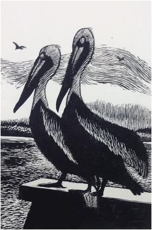 """Brown Pelicans"""