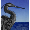 """Great Blue""<br /> wood engraving 4.25""x 5.5""<br /> edition of 20; 2008<br /> 32nd Annual SanibelCaptiva Art League juried show, 3/08"