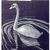 """Mute Swan 2"""