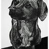 """Chip (Himself)""<br /> wood engraving 4""x6""<br /> edition of 10: 2011"