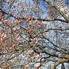 Cherry Blossom Florets